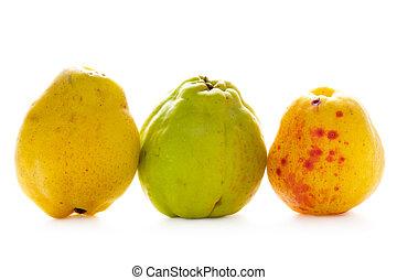 membrillo, fruta, aislado