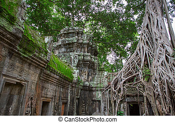 Ta Prohm in Angkor Wat - Giant tree covering the stones of...