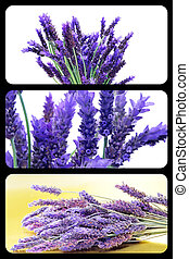 lavender collage - a collage of three pictures of lavender