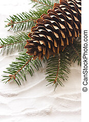 Pine cone. - Pine cone and spruce branch on the snow.