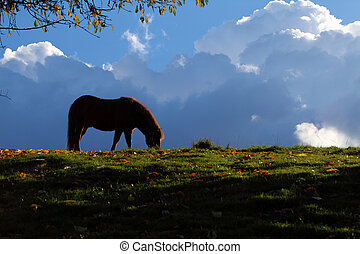 Horse - thunderclouds - A horse grazing in front of storm...