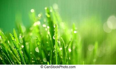 green grass under the rain