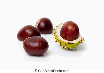 Chestnut - isolated Chestnut on white background
