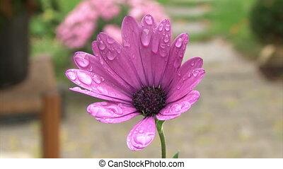 Teenager girl smelling flower