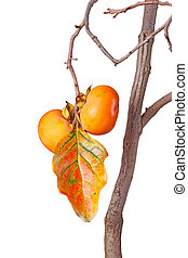 Ripe persimmons and leaf isolated against white - Two ripe...