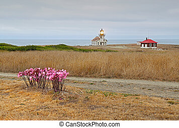 Point Cabrillo lighthouse and Amaryllis on a cloudy day -...