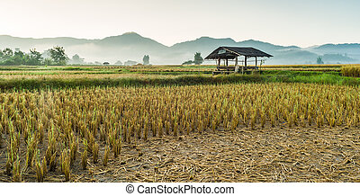 hut in rice field in morning time in thailand