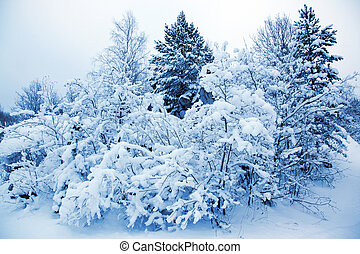 Covered trees in snow in the winter forest