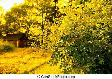 Autumn in rural area