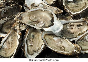 Oysters on a silver platter - Oysters on a silver tray close...