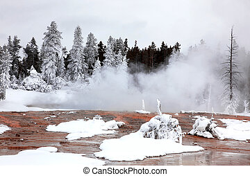 winter season in Yellowstone National Park,  USA