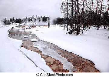 winter season in Yellowstone National Park, Wyoming, USA