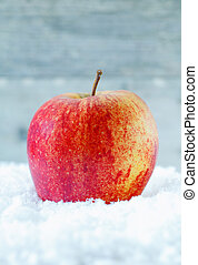 Fresh apple in winter snow - Closeup of a fresh healthy ripe...