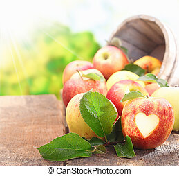 Collection of freshly picked apples - Collection of freshly...