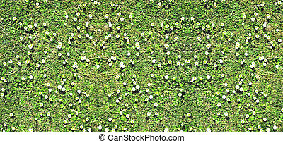 Green grass and daisies