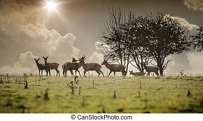 deer - An image of a some nice deer in the morning light