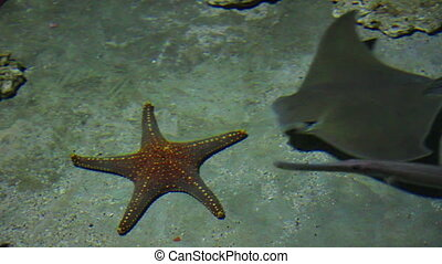 starfish and rays in shallow