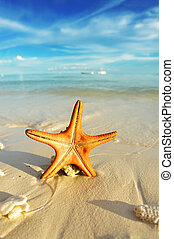 Starfish on a beach - Starfish on a beautiful beach