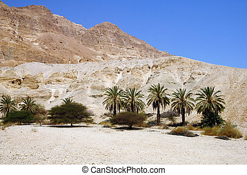 The Judean Desert Israel - Landscape of the Judean Desert,...