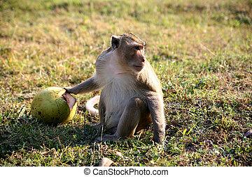 mono, coco