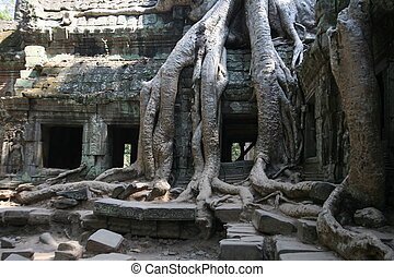 The jungle that surround temple of Angkor Wat in Cambodia