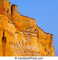 Blabk cormorants on huge cliff