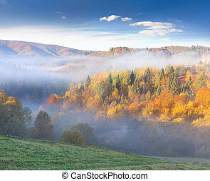 Colorful autumn landscape in the mountains. Foggy morning