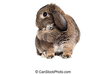 Adorable rabbit isolated in white