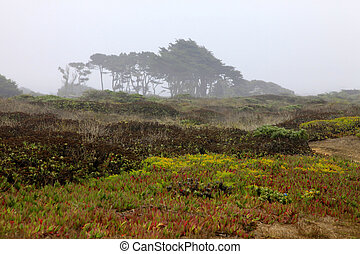 Half Moon Bay - Foggy autumn morning in California. Half...