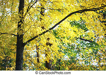 Fall Foliage in the Northeast - Fall Foliage in the Saratoga...