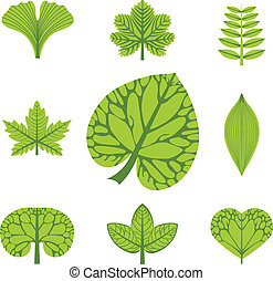 different  types of leaves, vector illustration, set