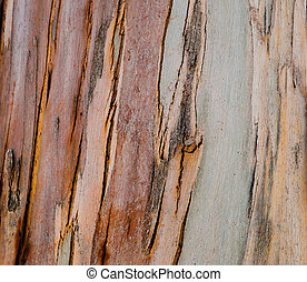 background natural wood eucalyptus tree