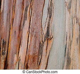 achtergrond, natuurlijke, hout, eucalyptus