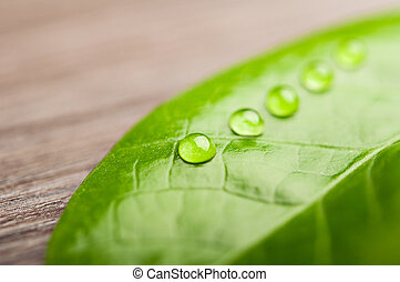 green leaf and water drops