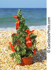 木, 浜, クリスマス