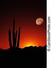 Saguaro Moon Arizona United States