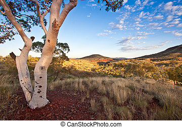 Dawn in the Pilbara, a dry region found in the north of...