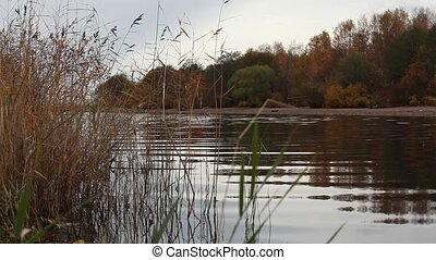 riverbank in autumn - Gulf of Finland autumn the end of...