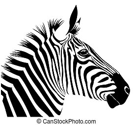Zebra - illustration of zebra head in line art style