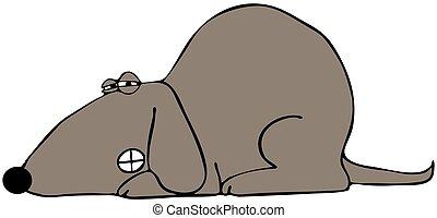 Dog baring its teeth