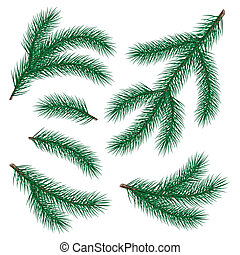 set of fir branch on white background vector illustration