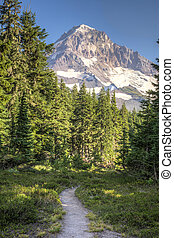 Trail to Mt Hood - Forest trail leading to Mt. Hood in...