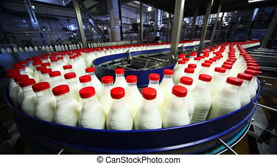 many bottles milk move wide conveyor belt at factory