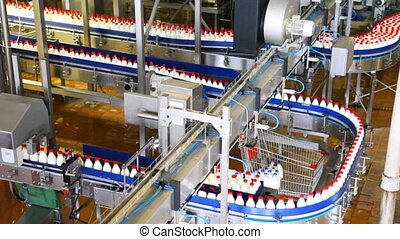bottles of milk move long conveyor first in one, then many ranks at factory