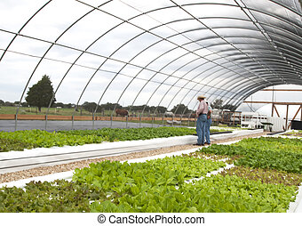 Growing Lettuce in an Aquaponics Greenhouse - This...
