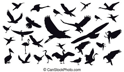 Set of different photographs of birds isolated on white background.