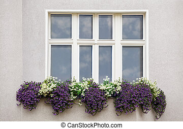 Window with flowers - Window with a Sky Reflection and...