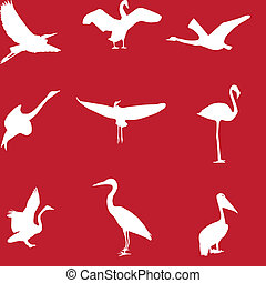 Set of different photographs of birds seamless pattern. Vector illustration. EPS 10