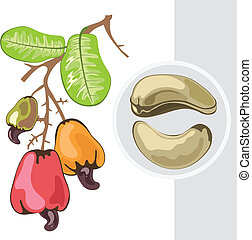 Cashew. Branch with fruits and nuts