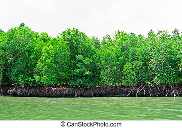The brake of mangrove for nursery of tiny fish.